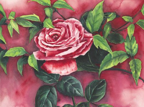 Suffolk Rose