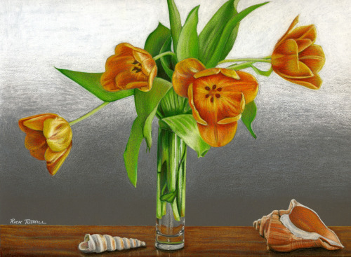 Tulip Still Life With Shells