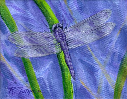 Rita's Dragonfly