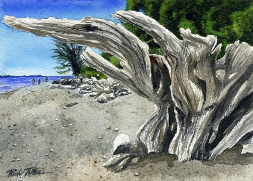 Came Beach Driftwood