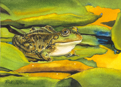 Frog and Lily Pads