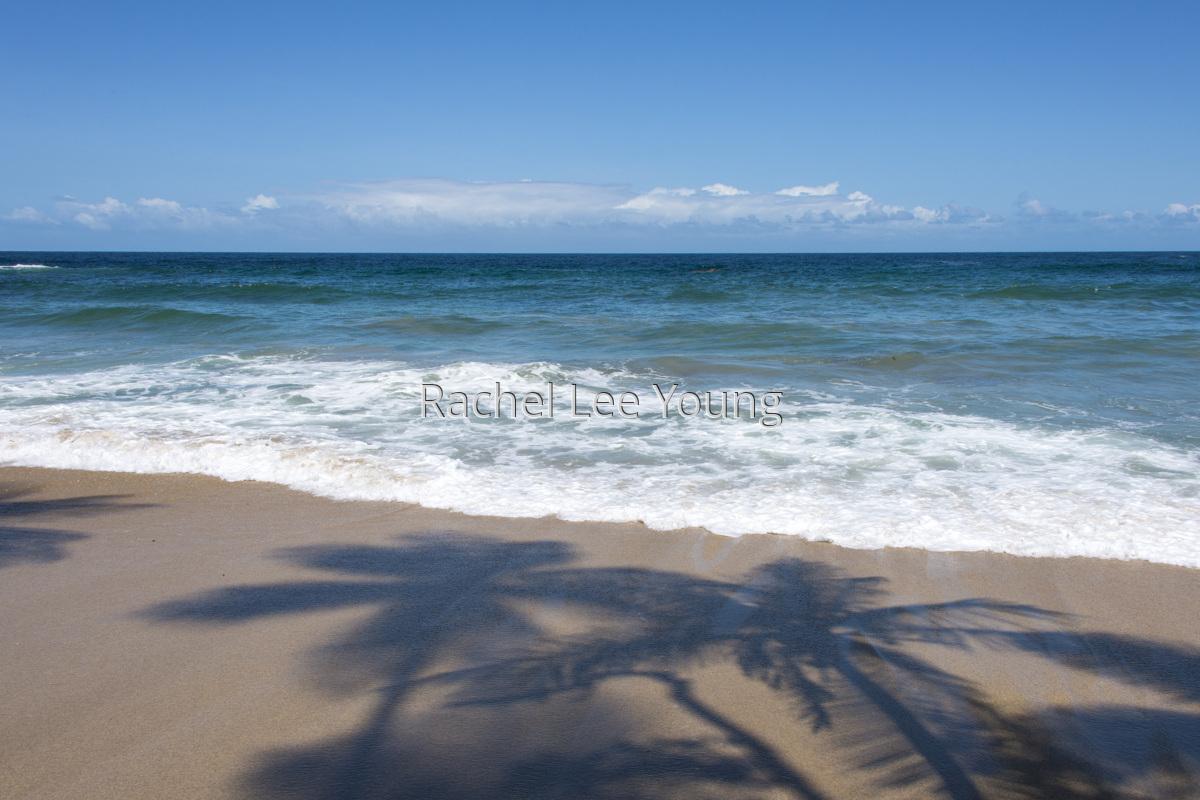 Coconut dreams (large view)