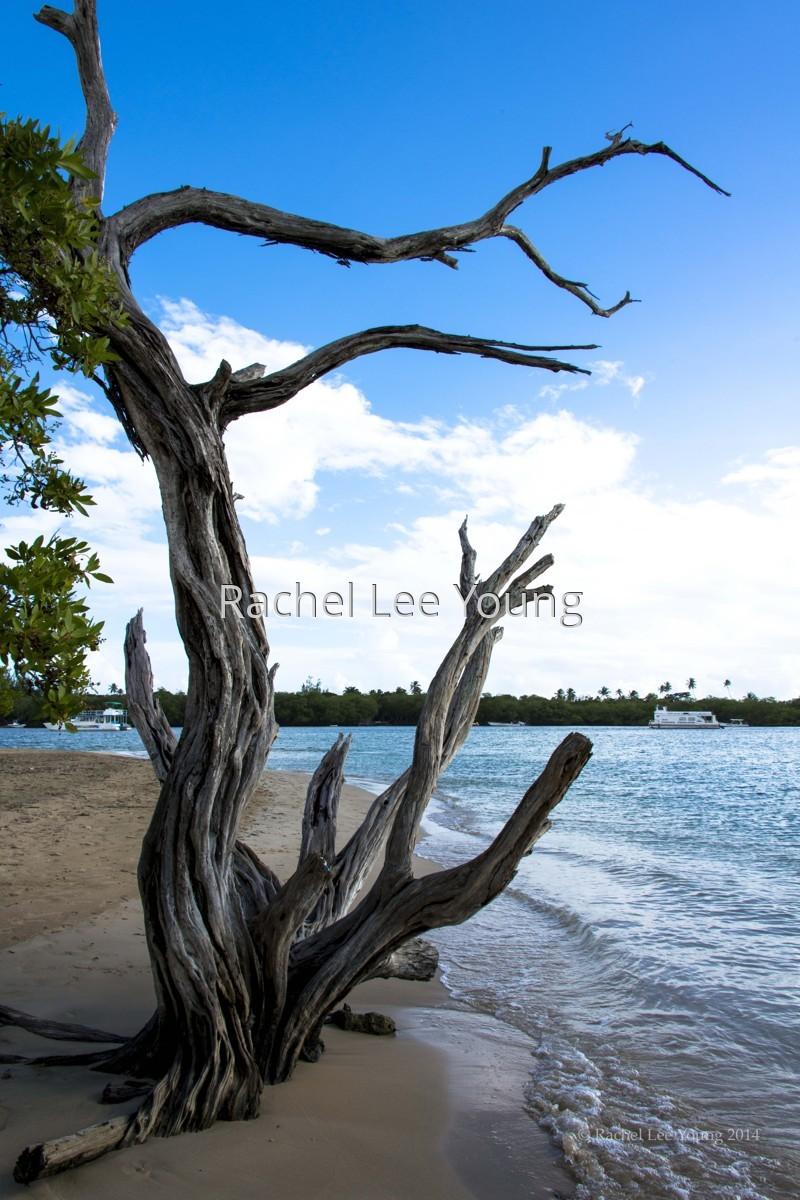 Tree at No Man's Land (large view)