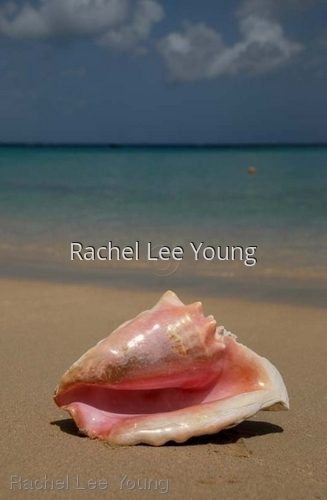 Conch on the Beach (large view)