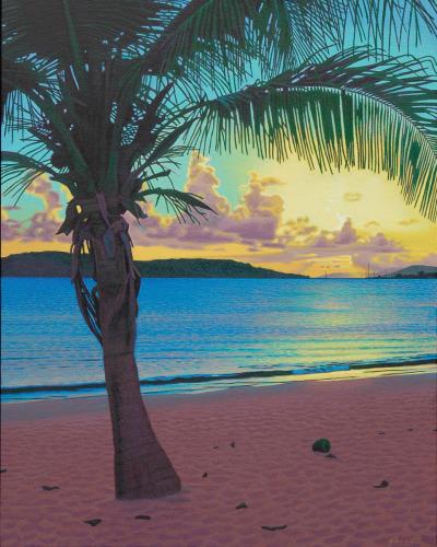 Palm, Sun Bay