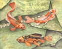 watercolor painting of three orange and black koi fish swimming in a pond with green stones (thumbnail)