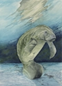 watercolor painting of manatee resting on the sand at Three Sister's Springs, Florida (thumbnail)