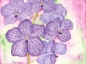 detailed watercolor painting of a stem of violet vanda orchid blooms (thumbnail)