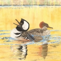 watercolor painting of a drake and hen hooding merganzer during breeding season with the male trying to attract the female as the sun sets on golden water (thumbnail)