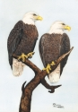 This is a watercolor painting of two bald eagles resting atop a dead tree, looking for their next meal. (thumbnail)