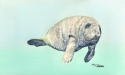 This is a watercolor painting of a lonely manatee floating in blue spring water. (thumbnail)