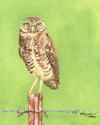 'BURROWING OWL' (thumbnail)