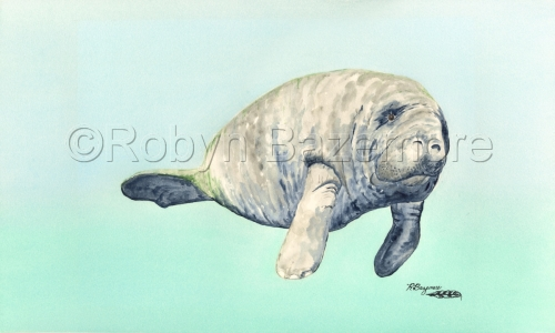 This is a watercolor painting of a lonely manatee floating in blue spring water. (large view)