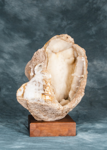SEA SHELL FRONT VIEW