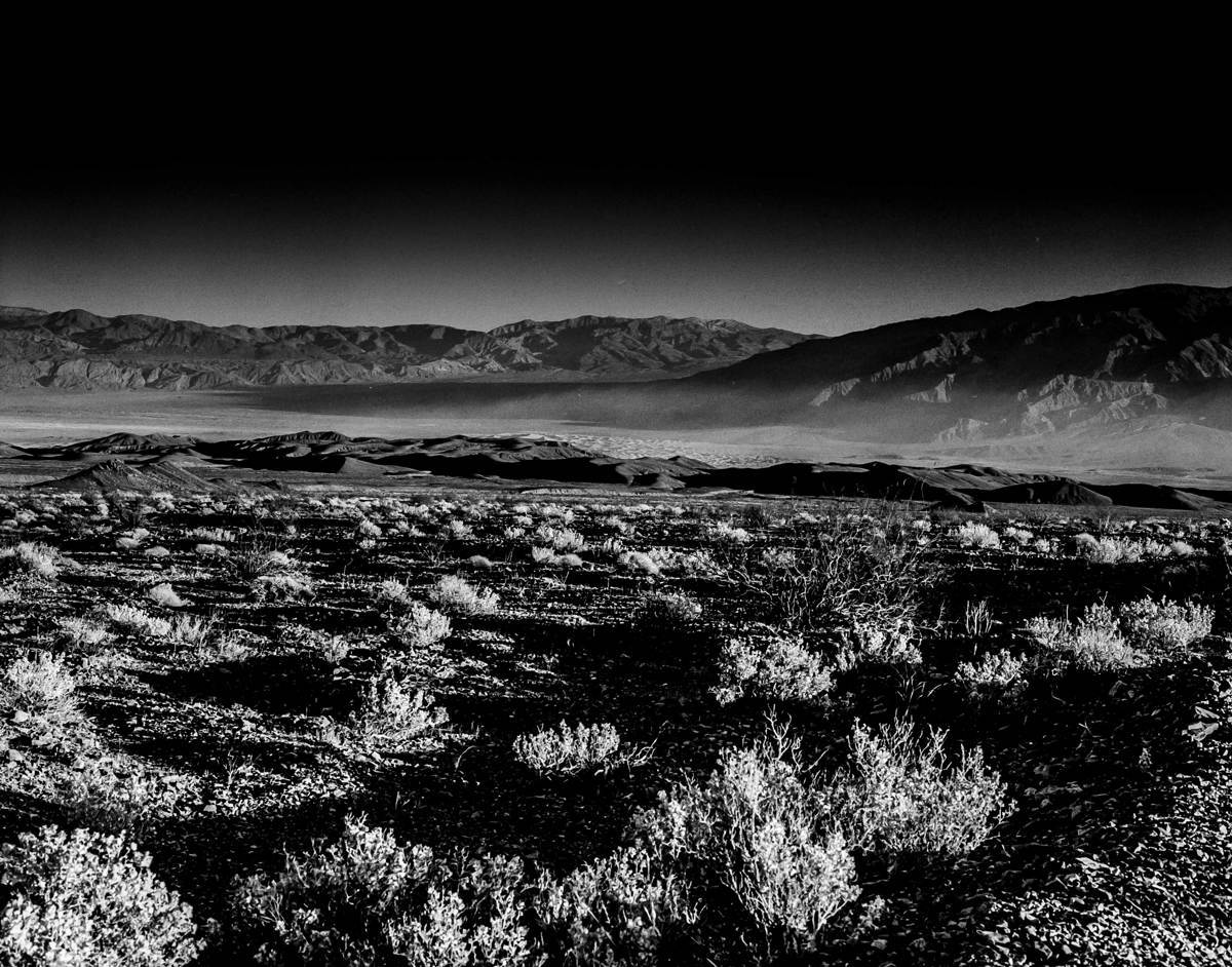 Death Valley Sage Brush (large view)