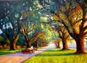 Crooked Oak Tree Canopy