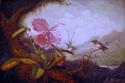 Painting--Oil-BotanicalCopy- Martin Johnson Heade