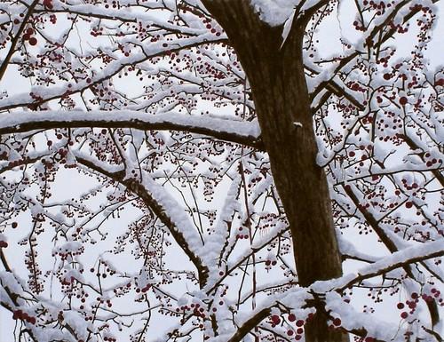 Snow Berries (large view)