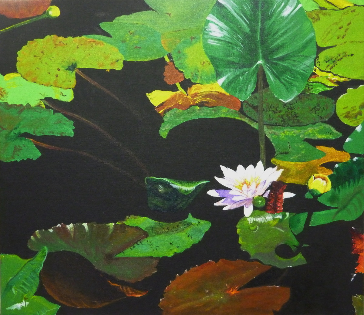 Water Lilies 5 (large view)