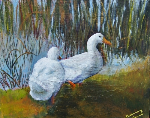 Our Ducks