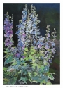 Delphiniums by Roseanne Roth (thumbnail)