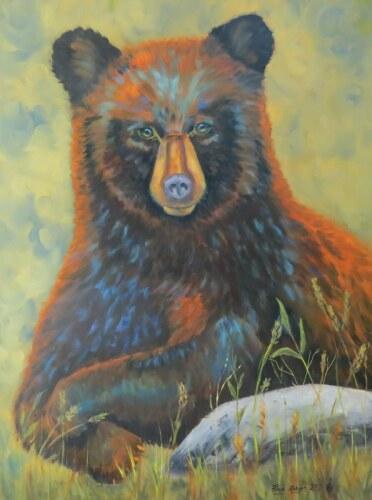 Curious - Black Bear