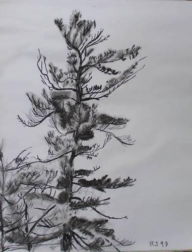 Charcoal Pine Tree