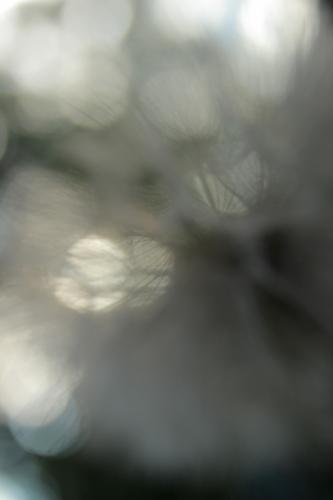 Blur Botanica I