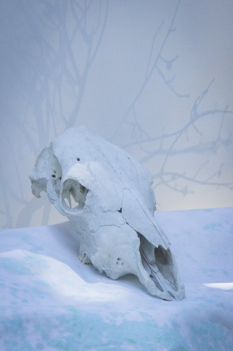 Cow Skull Study I in Ice Blue