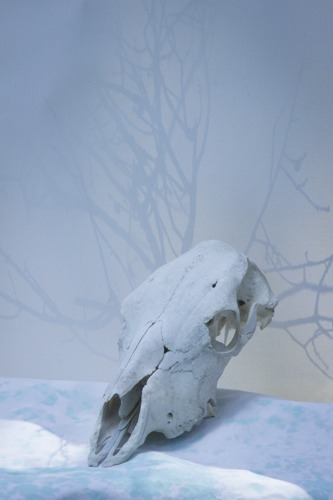 Cow Skull Study II in Ice Blue