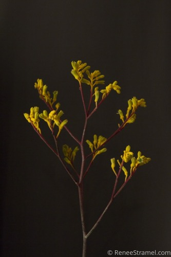 Dark Dutch Floral III