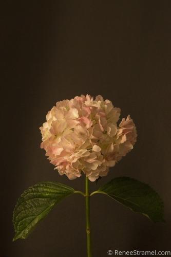 Dark Dutch Floral I