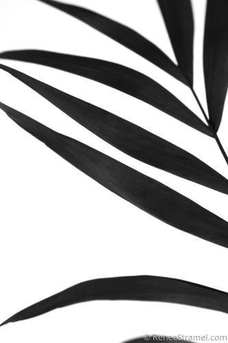 Black Palm VI