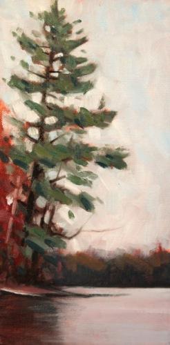 White Pine 7IL