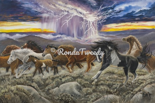 Mustang Thunder by Ronda M. Tweedy