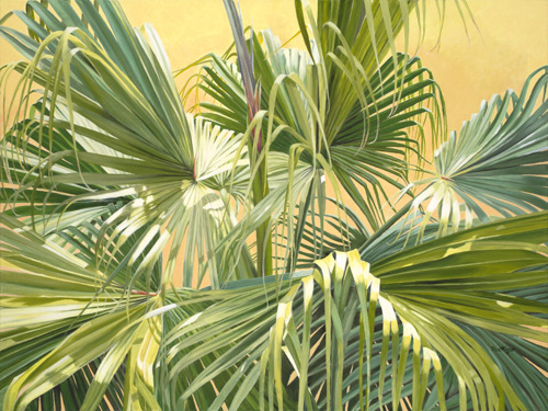 Tropical Light (large view)