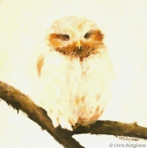 Owlet (large view)
