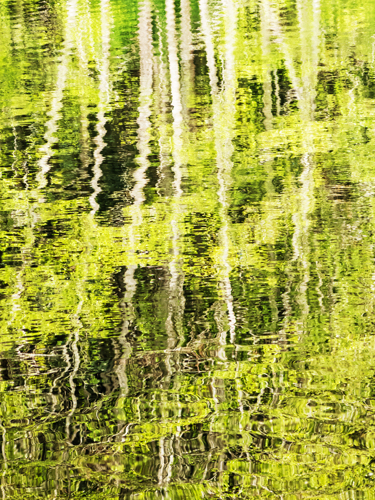 Pond Reflection, Bainbridge Island
