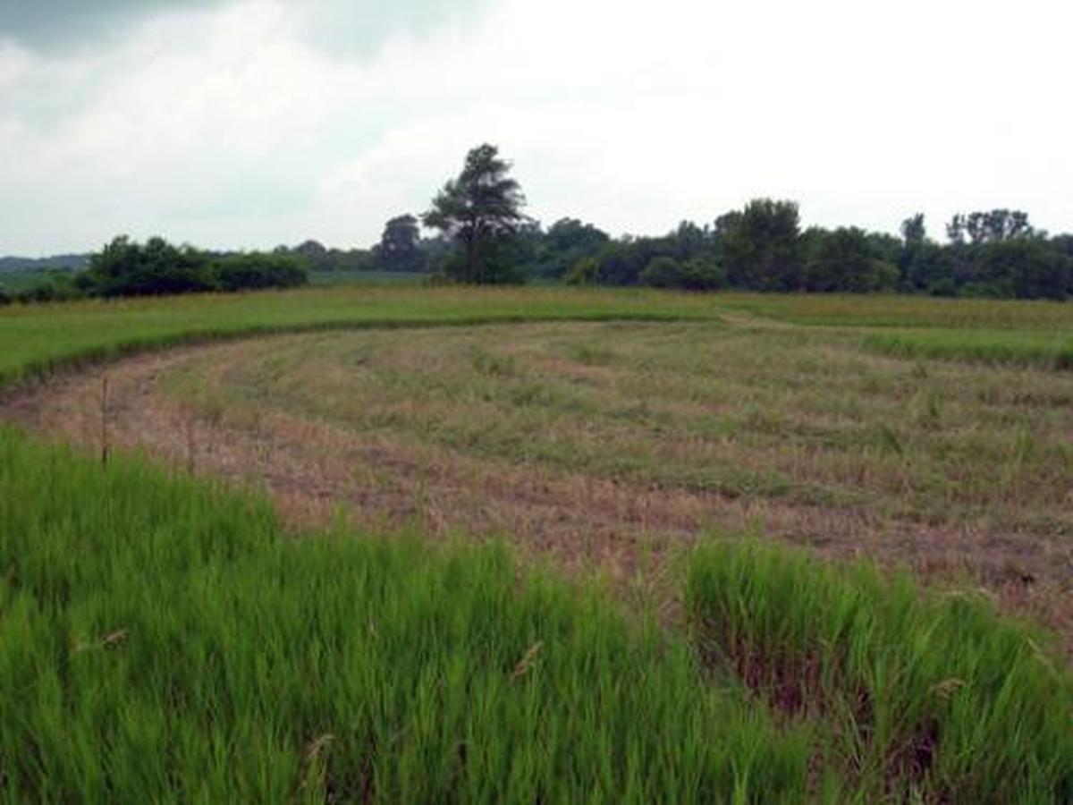 Fields Project Sculpture (large view)
