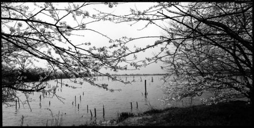 Mother Lake#42 (large view)