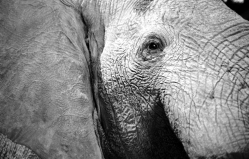elephant (large view)