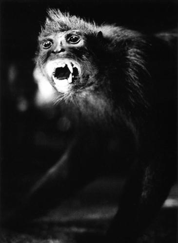 monkey (large view)