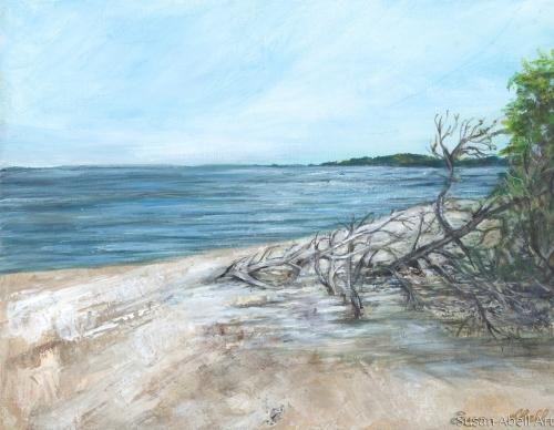 Driftwood Beach by Susan Abell Art