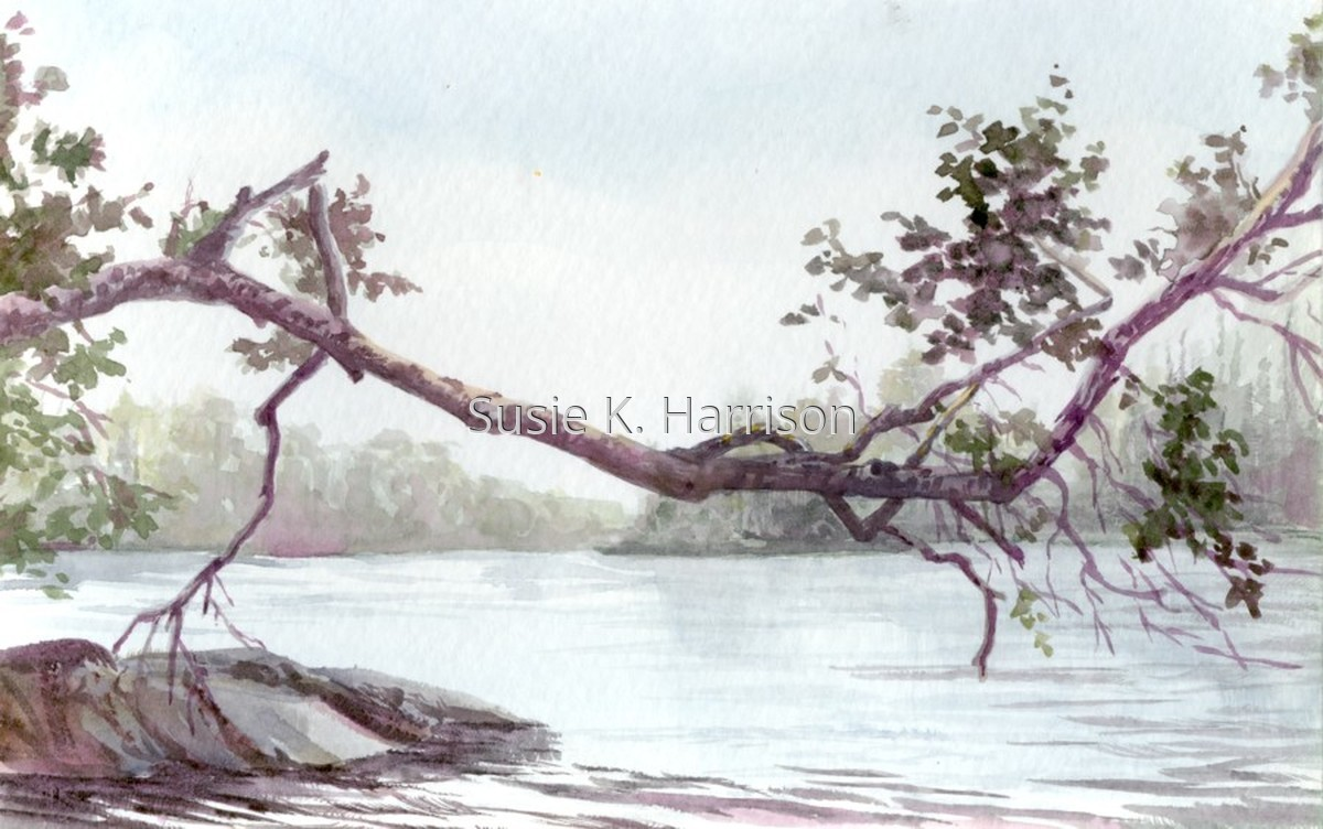 On the east shore, a birch tree stretches horizontally over the pond. (large view)