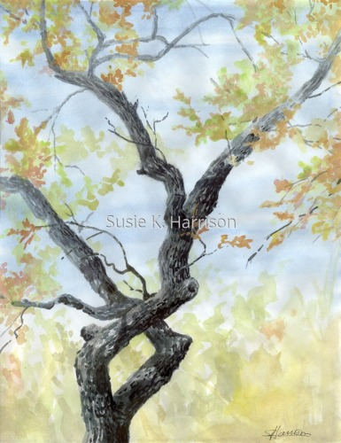 North Tree in Spring by Susie K. Harrison