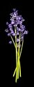 Photography--Color-FloralBluebells Vertical Bouquet