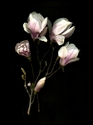 Photography--Color-FloralMagnolia Bouquet