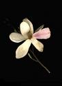 Photography--Color-FloralMagnolia Face Out
