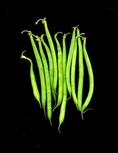 String Beans Group