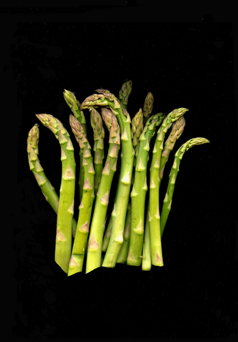 Asparagus Large Group